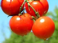 """Yo ya tengo mi """"Bono Tomate"""". Y vos,  ¿qué esperas?"""